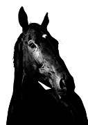 Thoroughbred Gelding Prints - Racehorse3 Print by James Callaghan