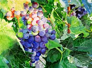 Wine Making Painting Prints - Racimo De Uvas Print by Maria Balcells