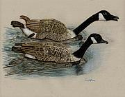 Waterfowl Drawings - Racing Geese by Cynthia  Lanka