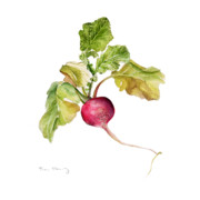 Vegetables Paintings - Radish by Fran Henig