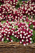 Salad Photos - Radishes in a basket by Jane Rix