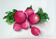 Linda Pope Posters - Radishes Poster by Linda Pope