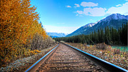 Will Cardoso Metal Prints - Rail Road of Life Metal Print by Will Cardoso