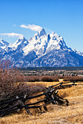 Split Rail Fence Prints - Rail to the Tetons Print by Carolyn Fox