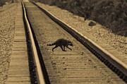 Raccoon Photo Posters - Railroad Bandit Poster by DigiArt Diaries by Vicky Browning