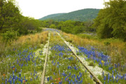 Bluebonnets Prints - Railroad Blues Print by Robert Anschutz