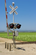 Lettuce Photos - Railroad Crossing by Juan  Silva