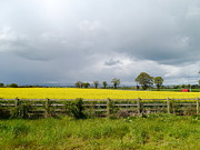 Christiane Schulze Posters - Rain Clouds Over Canola Field Poster by Christiane Schulze