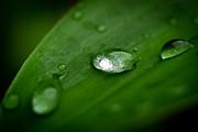 Rain Drops Print by Melle Varoy