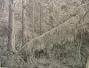Rain Drawings - Rain Forest by Dan Hausel