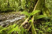 Moss Art - Rain Forest View  Tree With Buttresses by Tim Laman