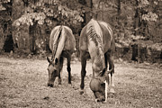 Rainy Day Photos - Rain in Horse Country by JC Findley