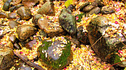 Forest Floor Prints - Rain on Fall Forest Floor Print by Evan  Jenkins