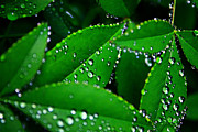 Plant Greeting Cards Art - Rain patterns by Toni Hopper