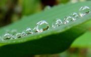 Rain Drops Art - Rain Pearls by Nika One