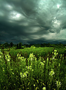 Rain Storms Framed Prints - Rain Framed Print by Phil Koch