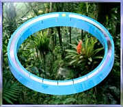 Drab Framed Prints - Rain Ring Forest Framed Print by Buddy Paul