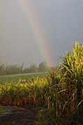 Hawaii Islands Photos - Rainbow Arching Into Field Behind Stream by Stockbyte