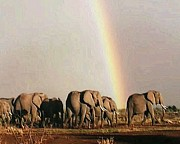 Rainbow Framed Prints Posters - Rainbow Chasing Elephants Poster by Daniel Madrid