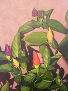 Chili Peppers Painting Originals - Rainbow Chili by Bonnie Behan