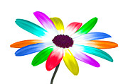 Multi-color Digital Art - Rainbow daisy by Richard Thomas
