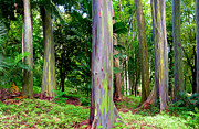 Monica Michael Sweet Metal Prints - Rainbow Eucalyptus Metal Print by Monica and Michael Sweet