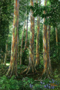 Hana Paintings - Rainbow Forest by Doug Kreuger