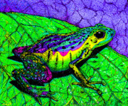 Whimsical Frogs Posters - Rainbow frog 2 Poster by Nick Gustafson