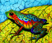 Rainbow Drawings Prints - Rainbow Frog Print by Nick Gustafson