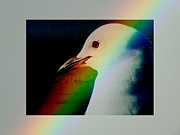 Sea Watch Posters - Rainbow Gull Poster by Karen Lewis