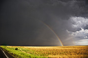 Jennifer Brindley - Rainbow in a Golden Field