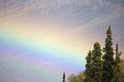 Yukon Territory Photos - Rainbow In A Northern Forest Over South by Pete Ryan