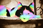 One Animal Mixed Media Posters - Rainbow Kitty Abstract Poster by Andee Photography