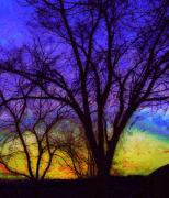 Julia Lueders Photos - Rainbow Morning by Julie Lueders