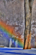 Winter Scenes Prints - Rainbow Oak Print by Emily Stauring