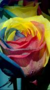 Rose Flower Greeting Cards Photos - Rainbow of Love 2 by Karen Musick