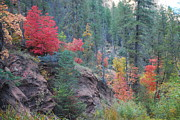 Oak Creek Prints - Rainbow of the Season Print by Heather Kirk