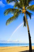 Ala Moana Metal Prints - Rainbow Over Ala Moana Metal Print by Dana Edmunds - Printscapes