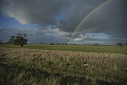 Kangaroo Island Photos - Rainbow Over Fields At Kangaroo Island by Sam Abell