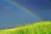 Thomas R. Fletcher Posters - Rainbow over Pasture Field Poster by Thomas R Fletcher