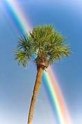 Rainbow Colors Posters - Rainbow Palm Poster by Patrick M Lynch