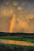 Country Scenes Photos - Rainbow Reflection by Emily Stauring