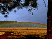 Pink Black Tree Rainbow Photo Metal Prints - Rainbow Ridge Metal Print by Cindy Wright