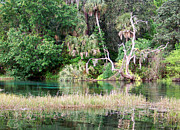 Dunnellon Prints - Rainbow River 5 Print by Judy Wanamaker