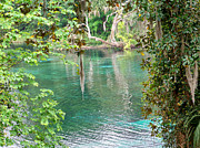 Dunnellon Prints - Rainbow River View Print by Judy Wanamaker