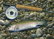 Trout Paintings - Rainbow Rocks by Mark Jennings