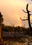 Pink Black Tree Rainbow Photo Posters - Rainbow Scripture Genesis 9 Poster by Cindy Wright