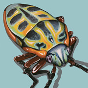 Jude Labuszewski - Rainbow Shield Beetle
