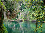 Dunnellon Framed Prints - Rainbow Springs 2 Framed Print by Judy Wanamaker