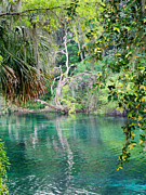 Dunnellon Photos - Rainbow Springs by Judy Wanamaker